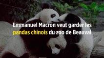 Emmanuel Macron veut garder les pandas chinois du zoo de Beauval