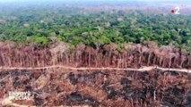 L'Amazonie sur le grill