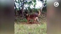 Cão Spy em operação para encontrar corpo
