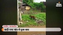 गांव में घुसा बाघ; दहशत से लोग घर की छतों पर चढ़े, रेस्क्यू के लिए भोपाल से भेजी गई टीम