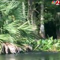 Ce kayaker a filmé une vingtaine de singes sautant dans l'eau pour fuir une confrontation.