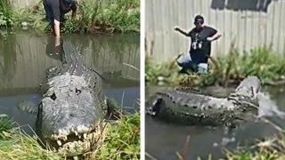 Il s'amuse à tirer la queue d'un alligator
