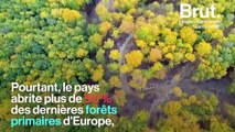 En Europe, des gardes forestiers assassinés pour avoir tenté de protéger les forêts