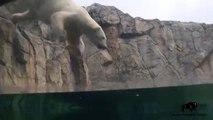 Polar Plunge with Hudson!