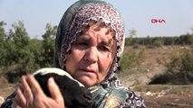 Adana 40 koyunu çalınan kadın gözyaşlarına boğuldu