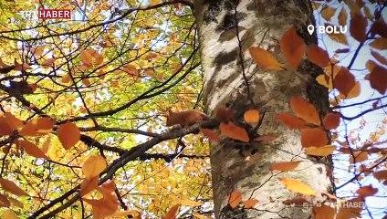 Türkiye'nin ormanlarına sonbahar uğradı