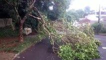 Chuva derrubou parte de árvore na Rua Pedro Ivo