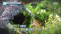 [HEALTH] Health food 'Platycodon' for respiratory tract, 기분 좋은 날 20191111