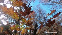 Peak fall colors arrive in New York City