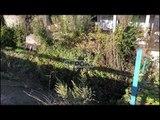 Panik në Lezhë, të shtëna me armë zjarri pranë stacionit elektrik