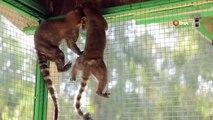 - Tarsus Hayvan Parkında tür sayısı alpaka ve koati ile 83'e ulaştı