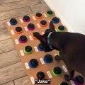 Ce chien arrive à s'exprimer en utilisant une table d'harmonie personnalisée