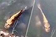 Un poisson au visage humain terrifie les internautes