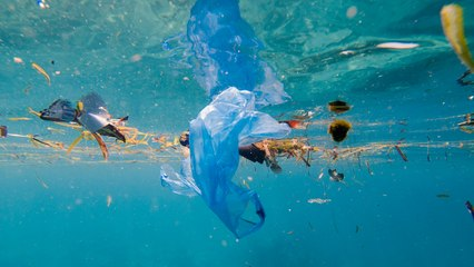 How Plastic Trash Is Threatening Baby Fish