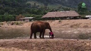 Cet éléphant est très protecteur avec sa maitresse... Adorable