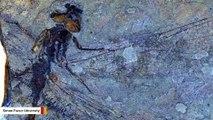 50-Million-Year-Old Dragonflies Found In Canada