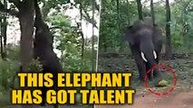 Elephant climbs tree to pluck Jackfruit using its trunk, goes viral | OneIndia News