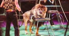 Paris : la mairie souhaite interdire la représentation d'animaux sauvages dans les cirques