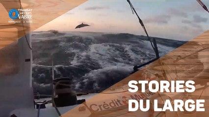 TRANSAT JACQUES VABRE - Les stories du large #Jour14/15/16 - 12/11/2019