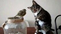 Ce chat fait un calin à un oiseau... Adorable