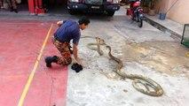 Il prend d'énormes risques en manipulant 2 cobras géants pendant son show