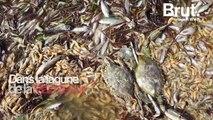 En Espagne, des milliers de poissons et crustacés retrouvés morts