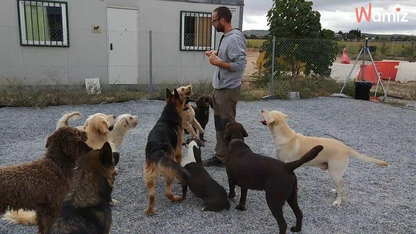 El comportamiento de los perros