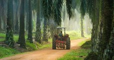 L'huile de palme maintenue parmi les biocarburants par l'Assemblée, les écologistes en colère
