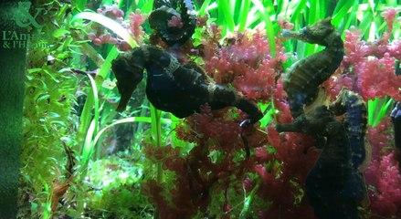 Reportage : l'aquarium de la Rochelle, aide pour la recherche et la ré-introduction
