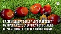 Les lobbies au pouvoir  : nos députés votent le maintien de l'huile de palme parmi les biocarburants