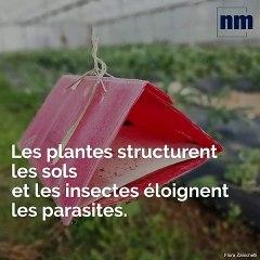 Le campus Vert d'Azur forme les agriculteurs de demain