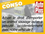 Accident avec un gibier : que faire de l'animal?