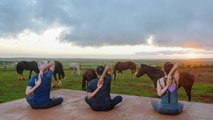 From Horse Yoga to Cow Cuddling, These Are the World's Wackiest Hotel Activities