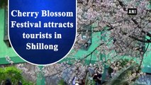 Cherry Blossom Festival attracts tourists in Shillong