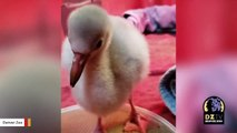 Watch: Flamingo Chick Learns To Walk