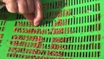 Eskiden Çöpe Atılan Propolisler Antibiyotik Olarak Kullanılıyor