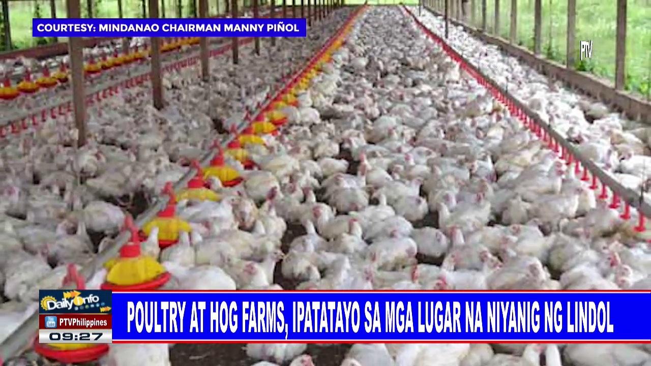 Poultry at hog farms, ipatatayo sa mga lugar na niyanig ng lindol
