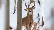 Man's Photo Of Three-Antlered Deer Goes Viral