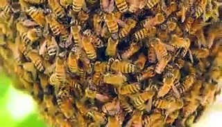 What would happen to the world's food supply if bees went extinct?