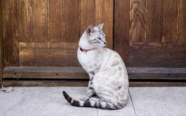 Le fléau des colliers pour chats !