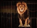 Les cirques au Portugal interdisent les animaux sauvages !