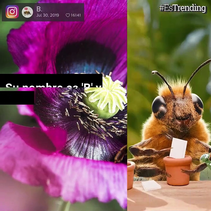 'B', la abeja influencer