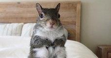 Secouru d'un ouragan, cet écureuil adopté par sa sauveuse ne peut plus s'endormir sans sa peluche