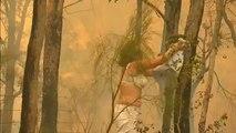 Emotivo rescate de un koala de entre las llamas de un incendio forestal en Sídney