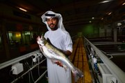 Fish farm in desert? Dubai's biting