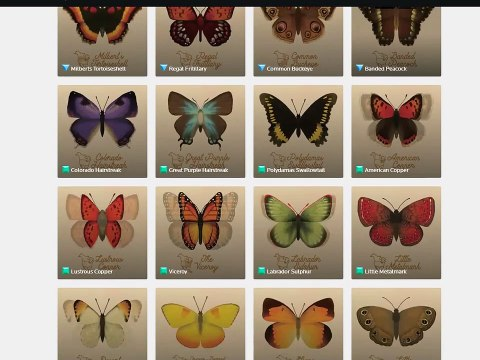 NeonMob Complete Butterfly Collection by Tabletopwhale
