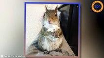 Un écureuil sauvé d'un ouragan a développé une habitude adorable