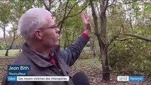 Isère : les noyers victimes des intempéries