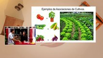 Huertos urbanos | Asociación de plantas en el huerto - Nex Panamá