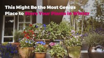 This Might Be the Most Genius Place to Store Your Plants in Winter
